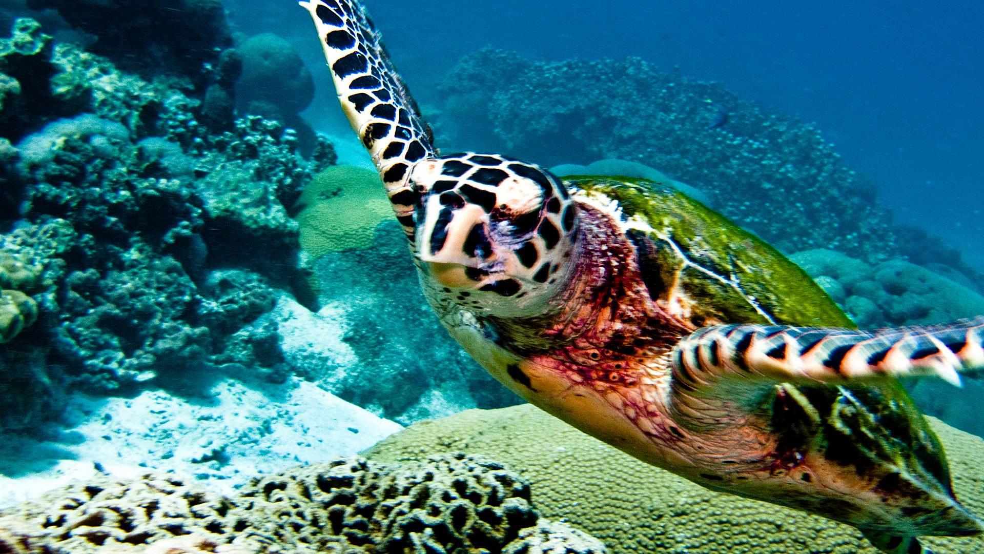 Détente et snorkeling en mer Andaman