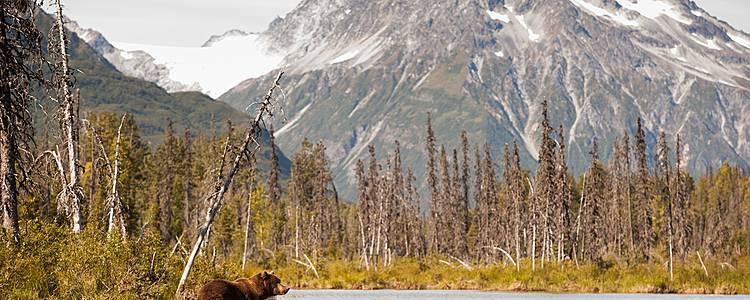Osos, glaciares y Parques Nacionales de Alaska