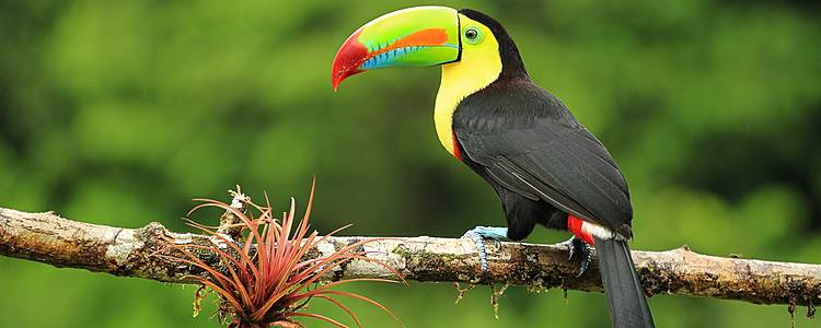 Parques nacionales y fauna exótica