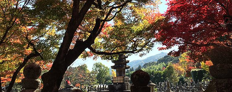 Tour Mizuki, lo spirito giapponese