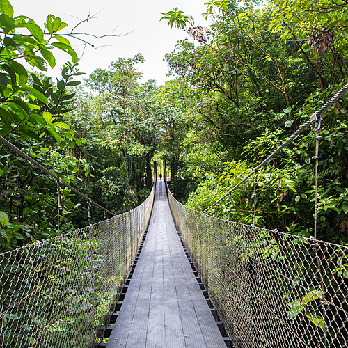Jungles et forêts en petit groupe - San José -