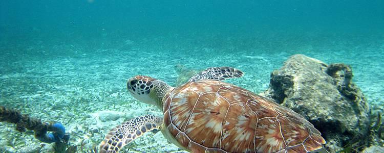 Il distretto di Cayo e le isole della barriera corallina
