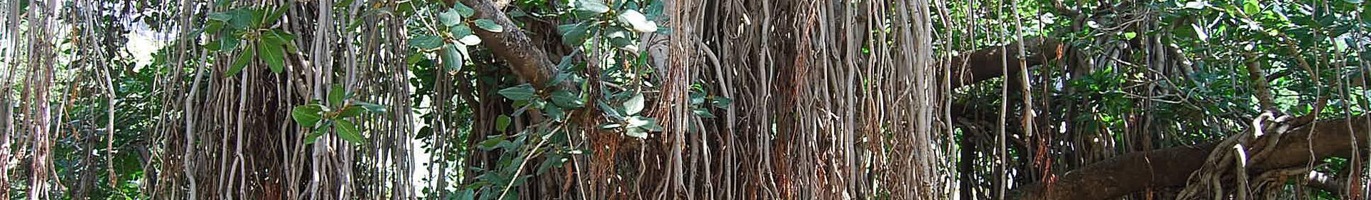 Aurangâbâd