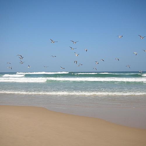 Les belles vagues en famille - D'ias -