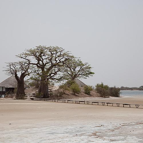 Sous le Baobab en famille - Lac Rose -