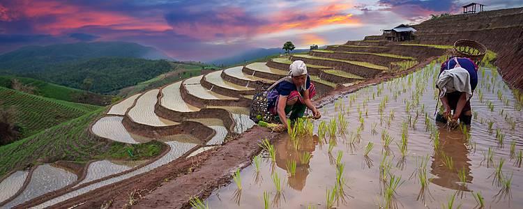 Des rizières en terrasses aux plages des Visayas