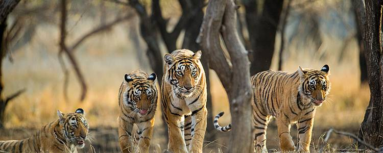 Golden Triangle and Ranthambore For Families