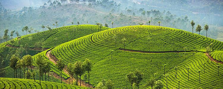 Tempel und Teeplantagen in Südindien