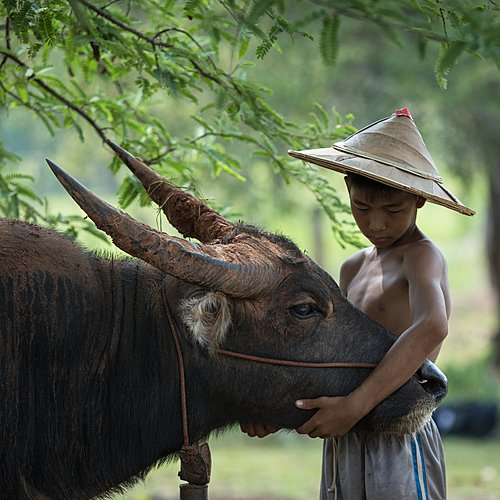 Epopée vietnamienne en famille -