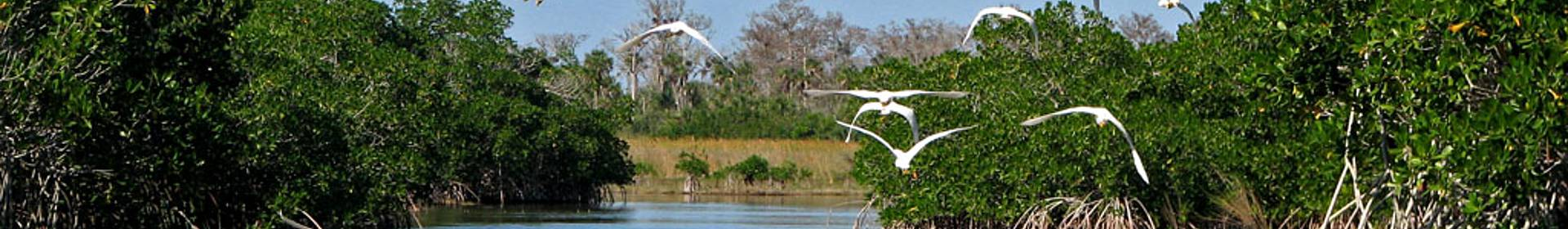 Parque nacional de los Everglades