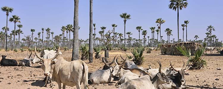 Il Sahel e il grande fiume