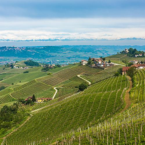 Région des Langhe et le Roero, à la découverte de la culture du vin - Asti -