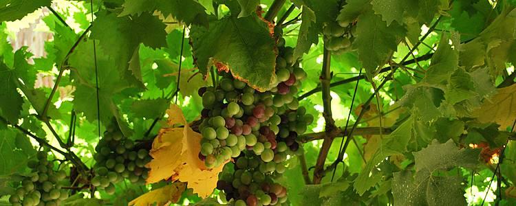 Wines Heritage