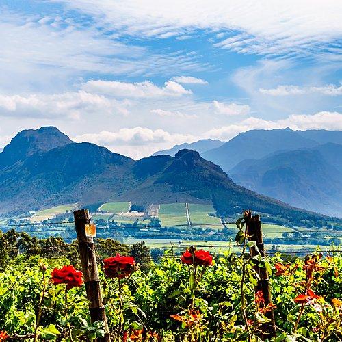 Merveilles des terres australes - Le Cap -