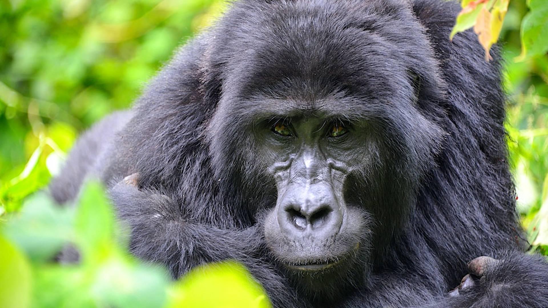 Auf Safari in Ruanda, Uganda und Tansania