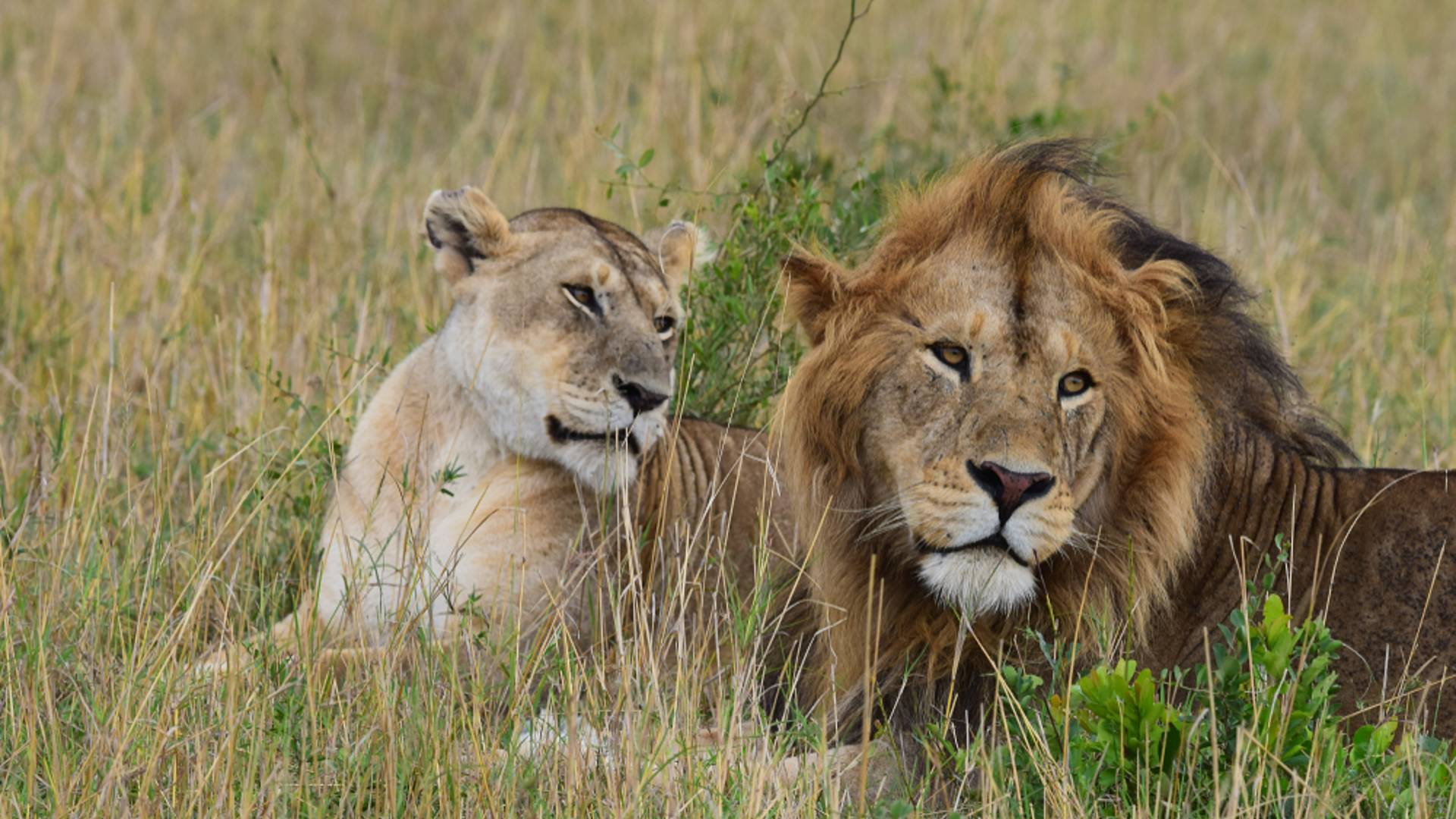 Safaris de noces en terres africaines
