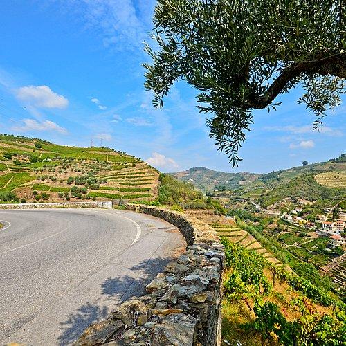 La route des vins autour de Porto -
