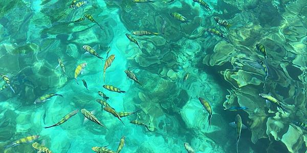 Regroupement de poissons