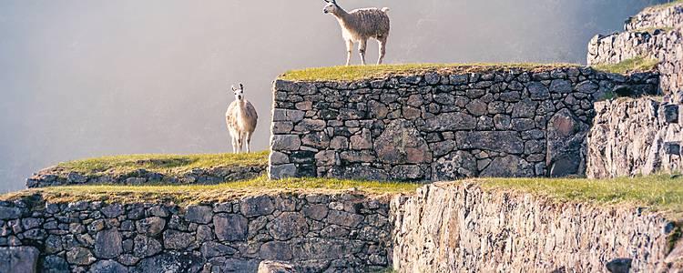 Trekking auf Inkapfaden zumMachu Picchu