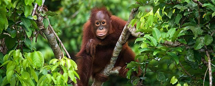 Borneos Natur und Tierwelt für Groß und Klein
