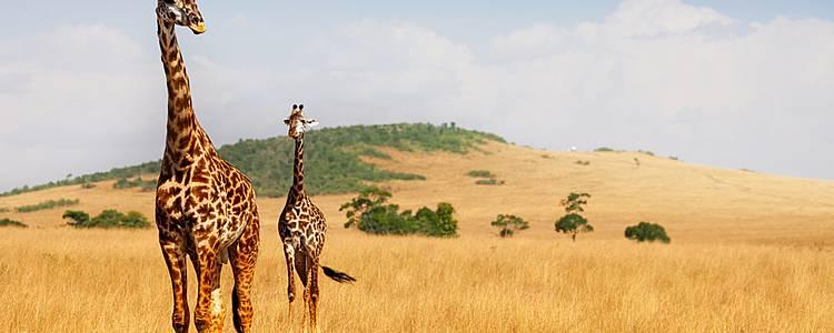 L'essentiel du Kenya