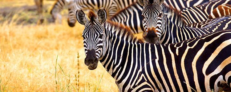 100% safari en petit groupe