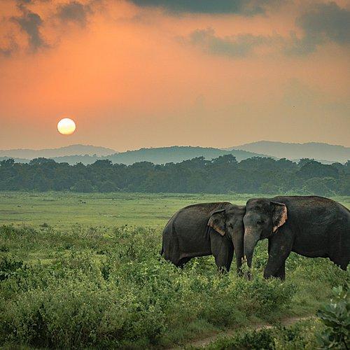 Photographie et vie sauvage - Colombo -