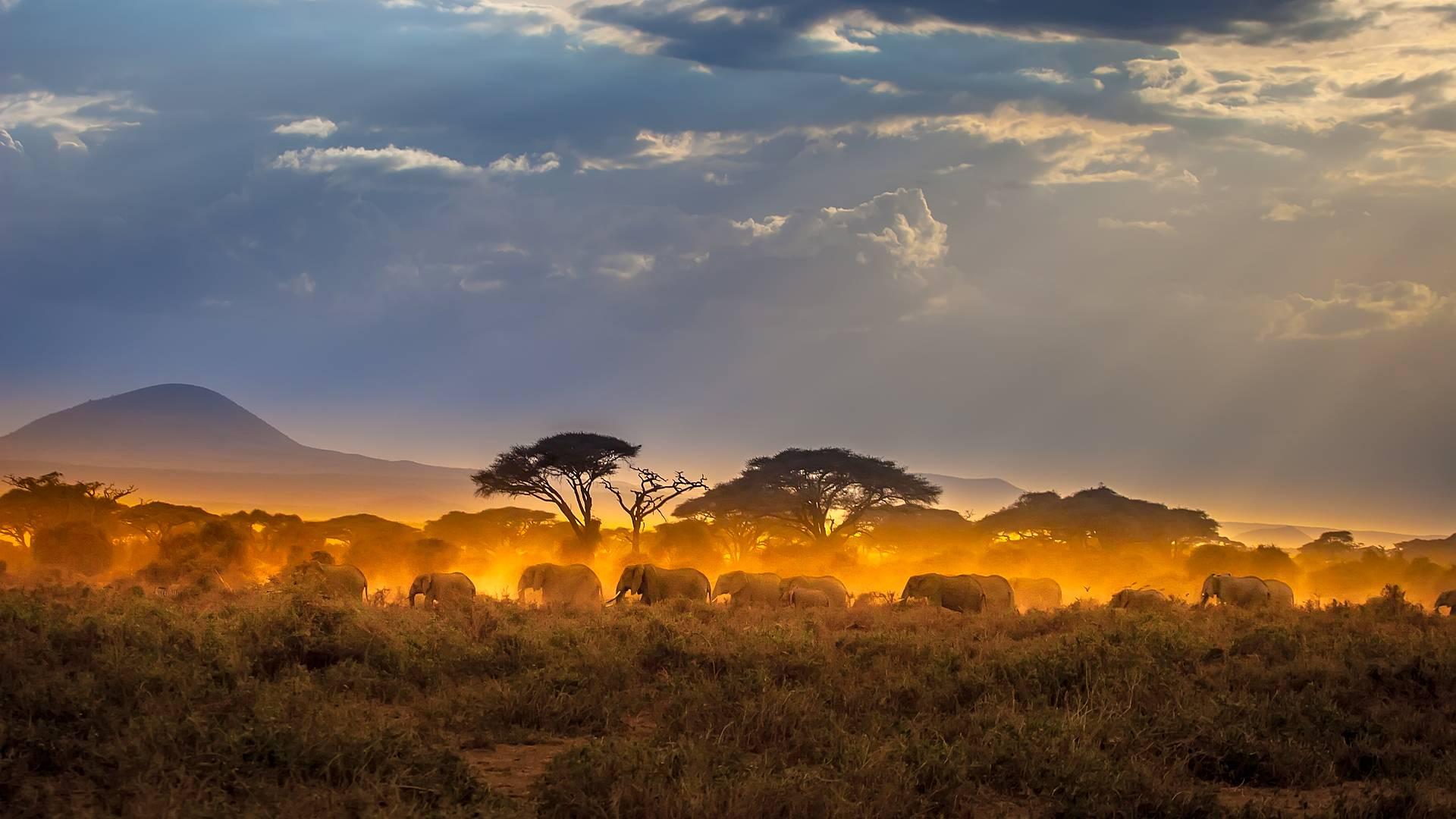 Safari Twiga en grupo