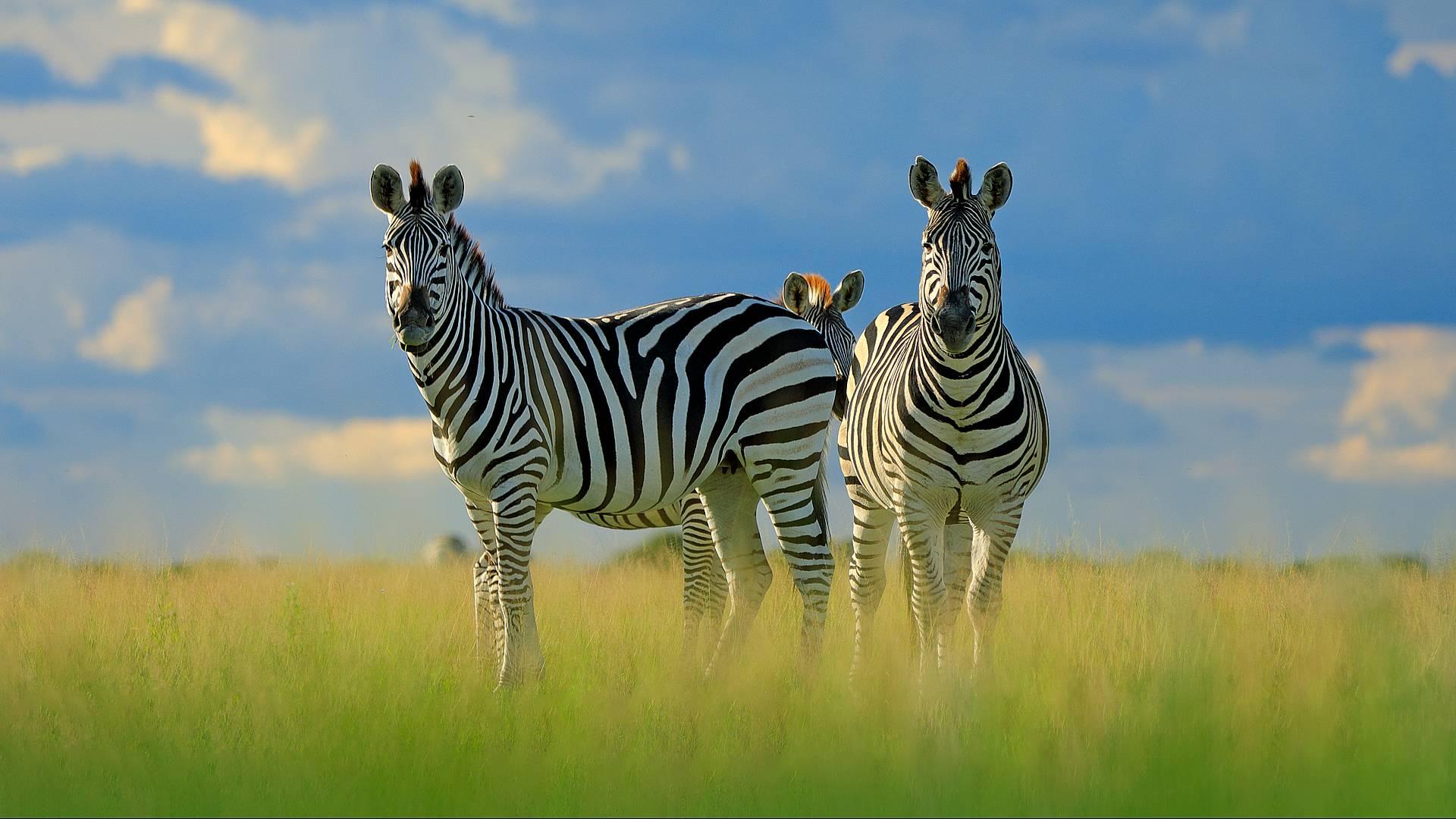 Safari esclusivo
