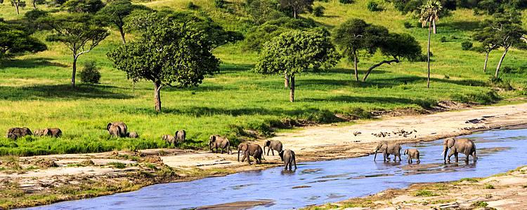 Safari por los mejores parques en grupo