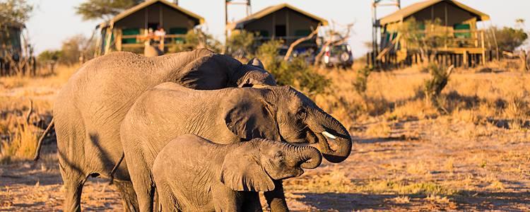 Auf Lodgesafari zwischen Wasser und Wüste