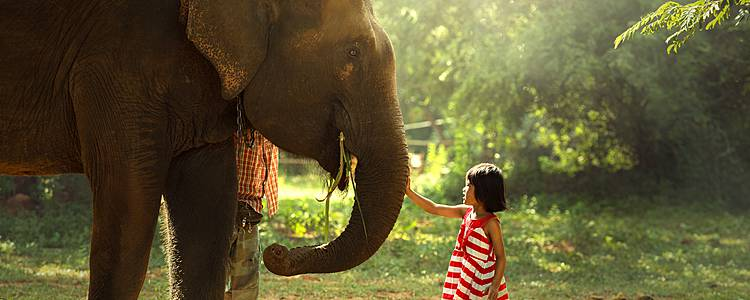 La tierra de los elefantes con los pequeños