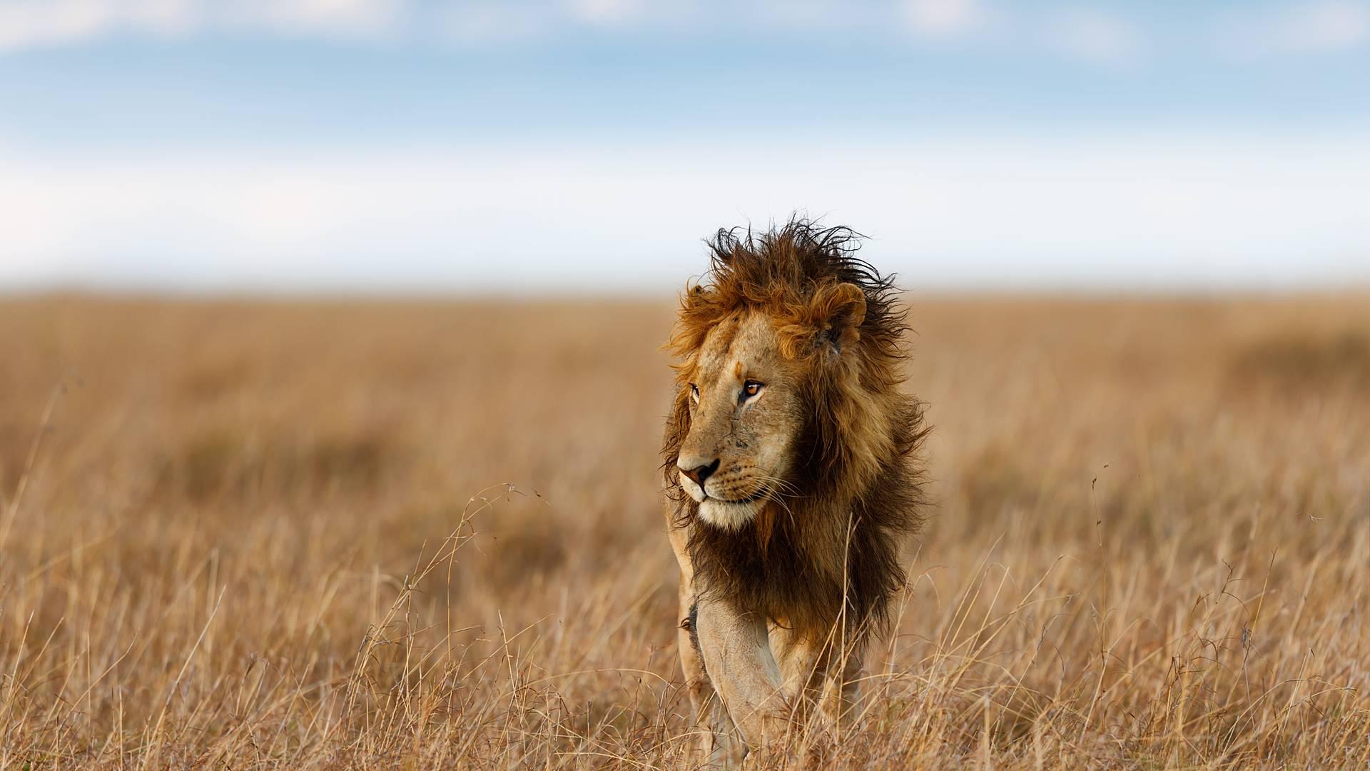 Safari durch die schönsten Nationalparks