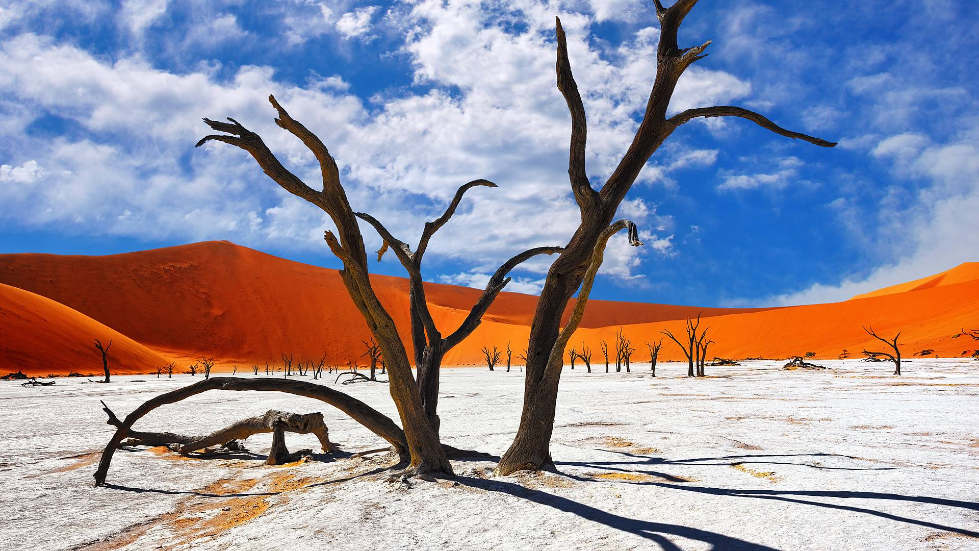 Namibische Kontraste