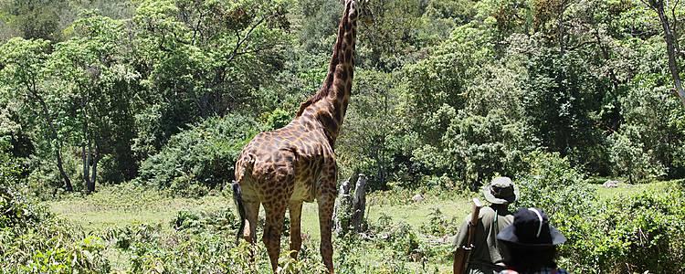 Zu Fuß Landschaften und Tierwelt entdecken