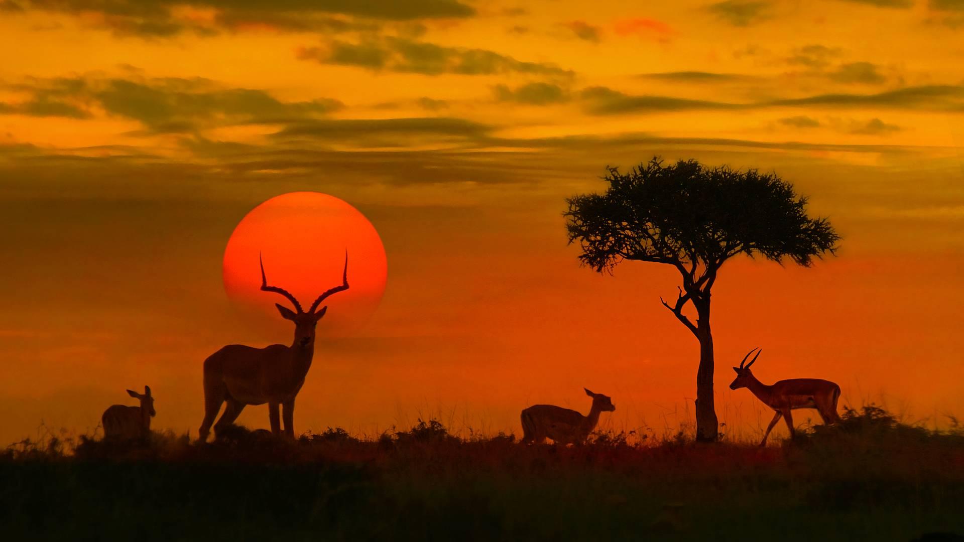 Der Lebombo Eco Trail im Krüger Nationalpark