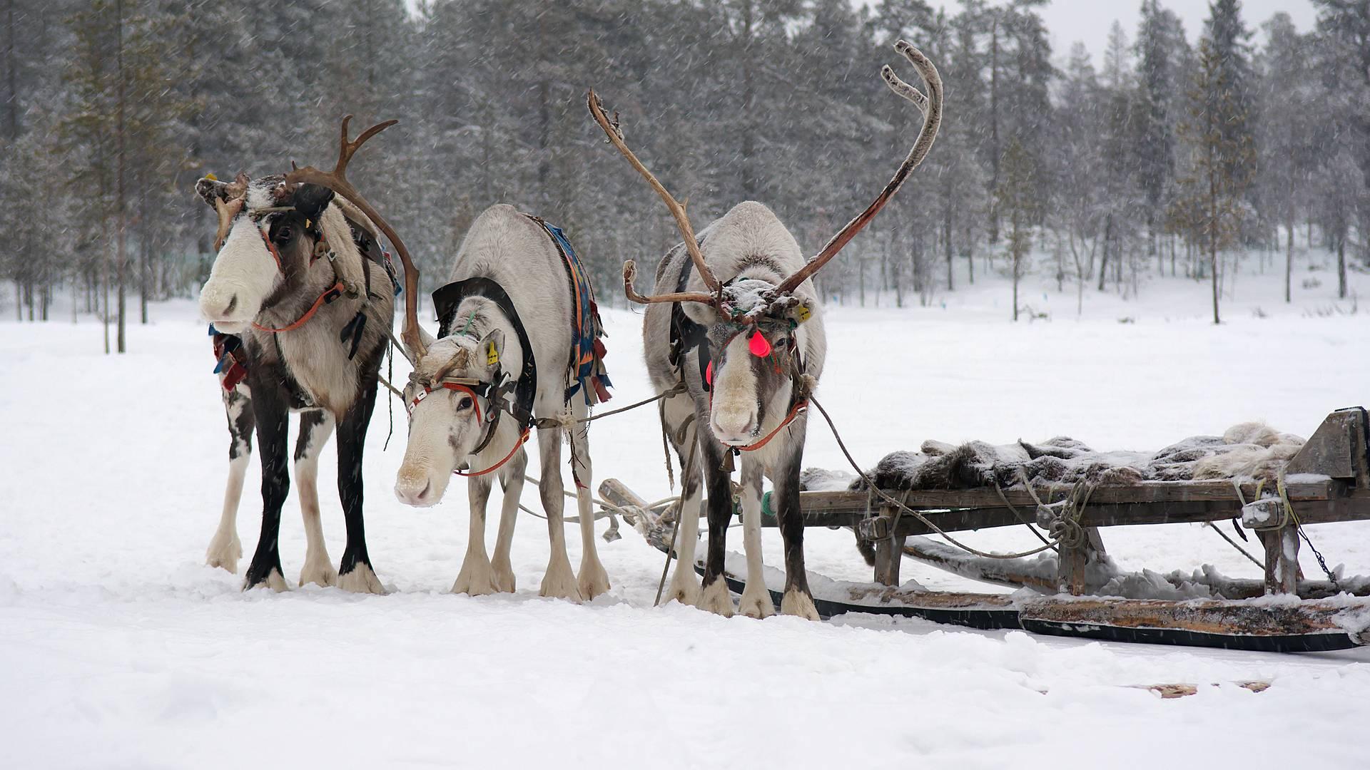 Finnisches Lappland und Naturwunder Norwegens