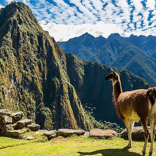 Les indispensables - Lima -