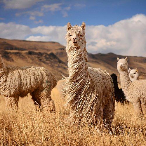 L'essentiel du Pérou et de la Bolivie - Lima -