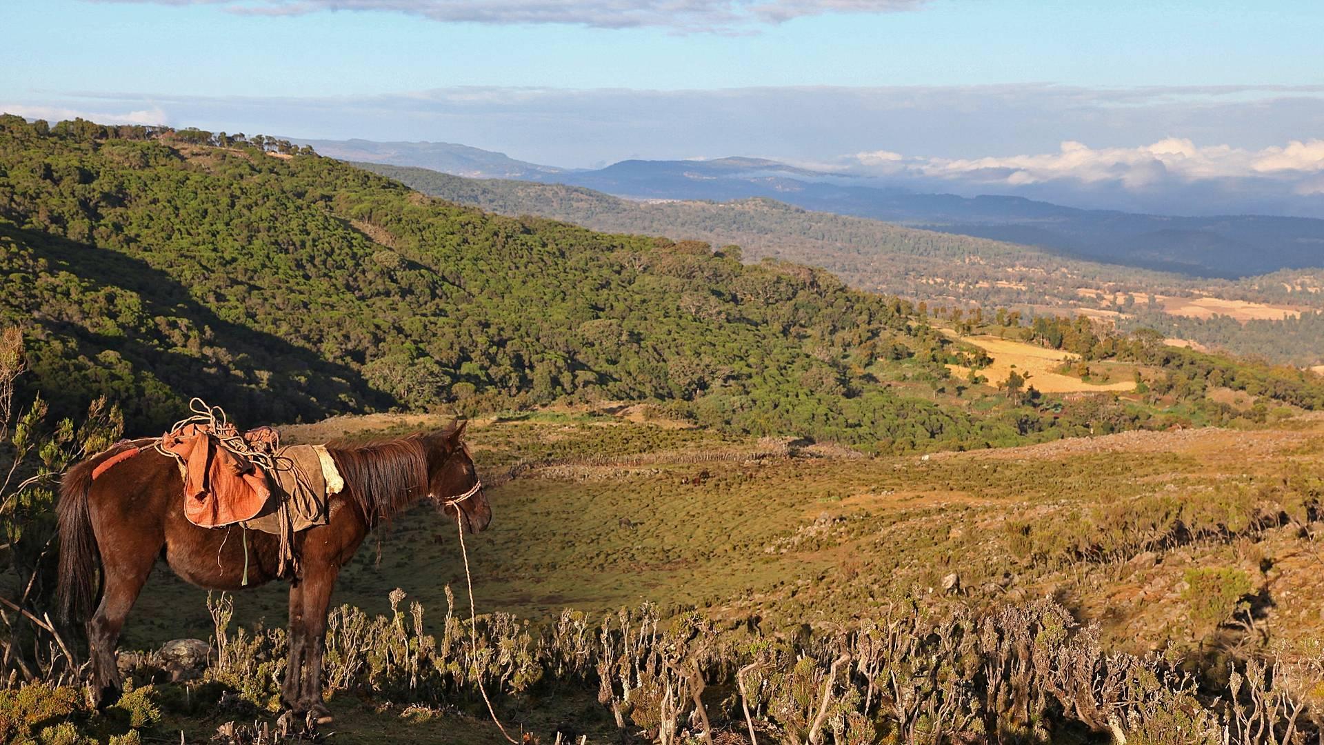 Reiten durch das Hochland der Bale-Berge