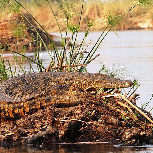 Evasion en famille Namibie-Botswana - Windhoek -