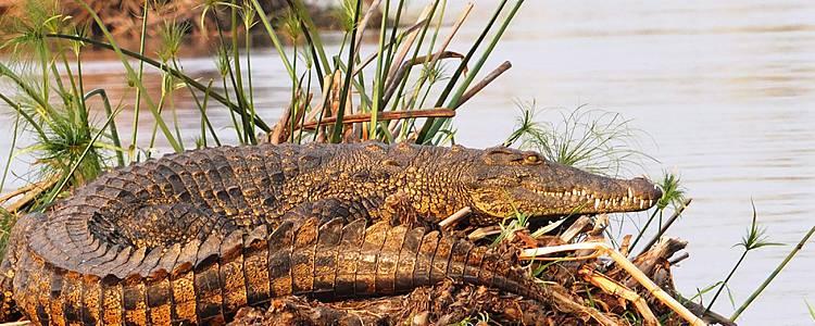L'Okavango et le Zambezi en famille