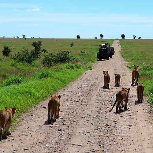 Grands parcs et île aux épices - Arusha -