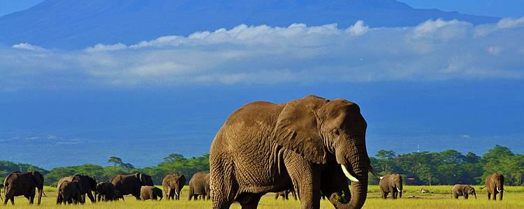 Joyas de África en Safari