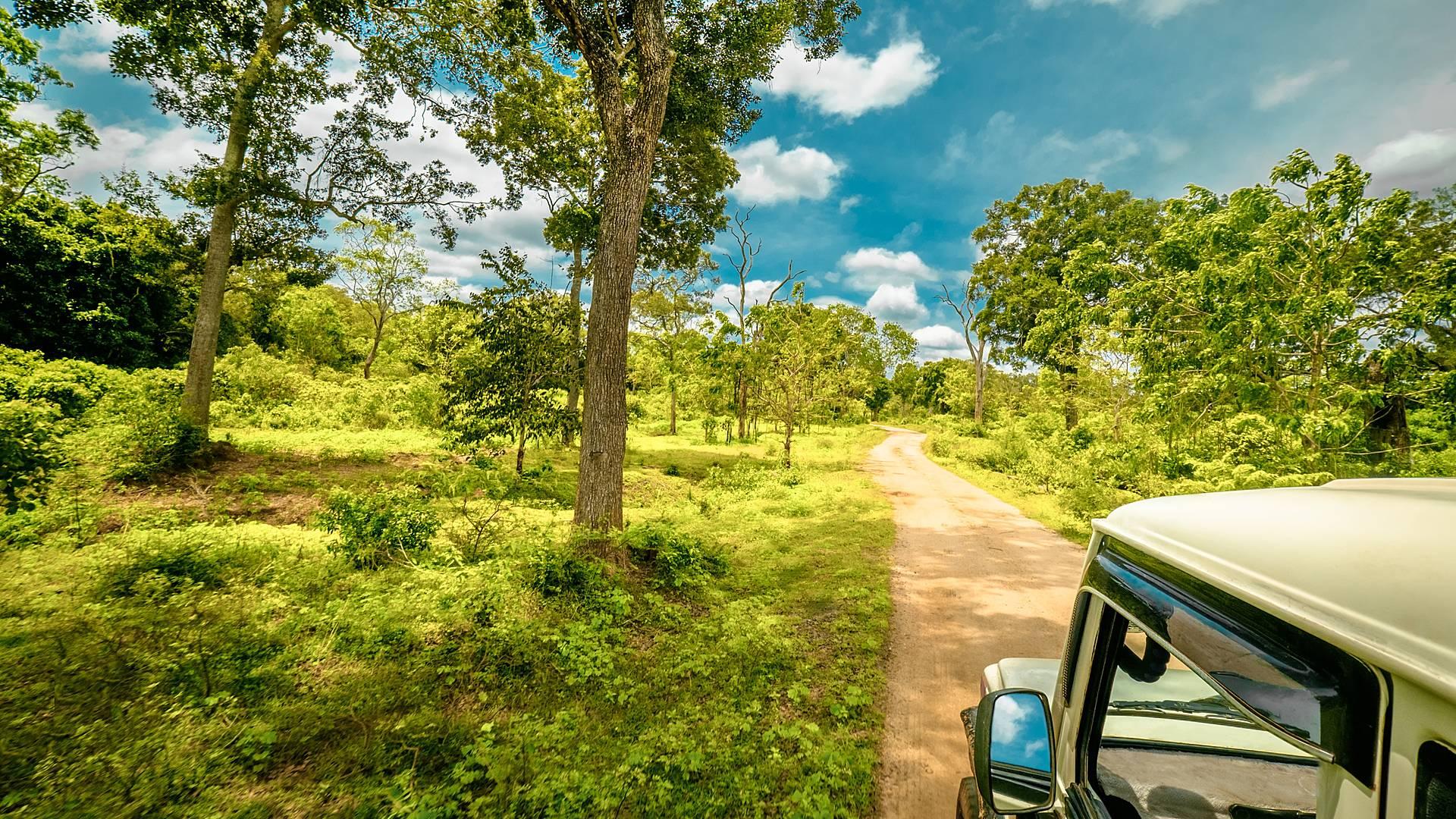Safari Naturaleza del Sur de Sri Lanka