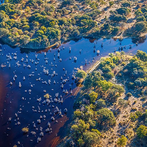 Mille et un Botswana -