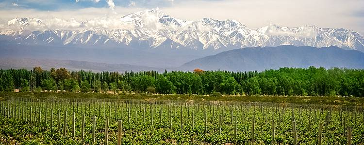 Wines and Landscapes