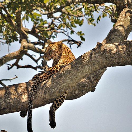 Sur la piste des grands fauves - Arusha -
