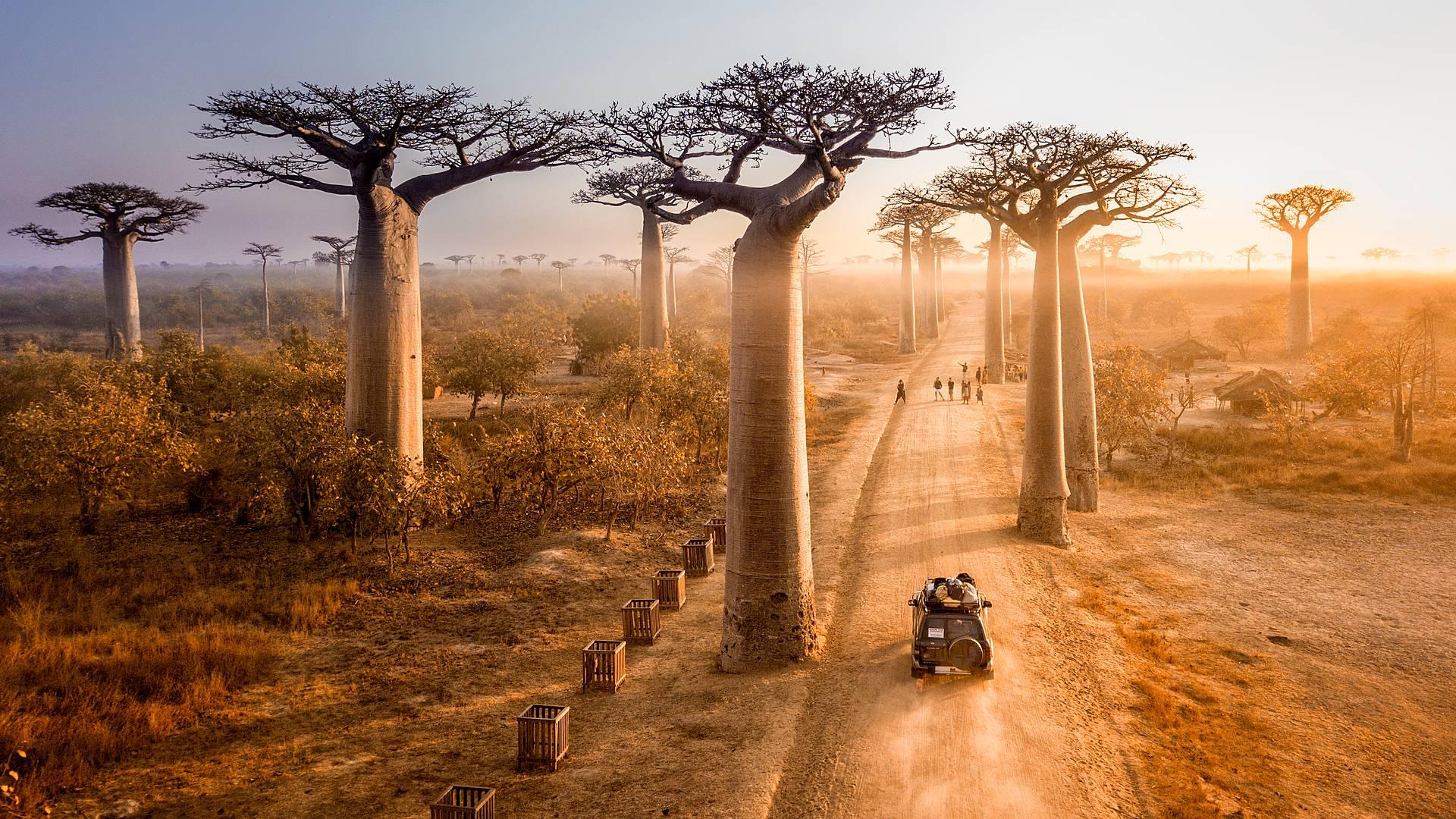 Del Oeste al Sur: Baobabs, Tsingy, Ifaty y Morondava