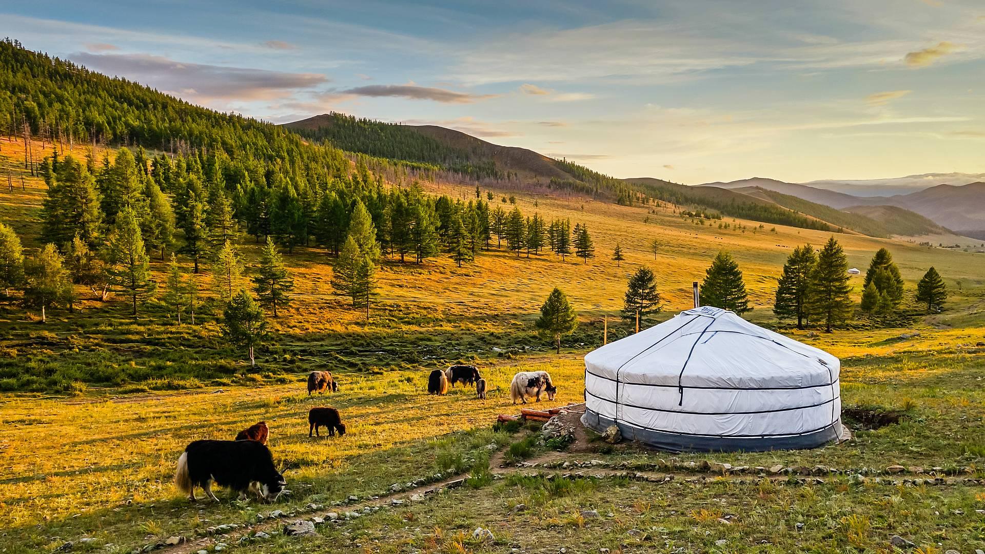 Viajar como un nómada por la estepa